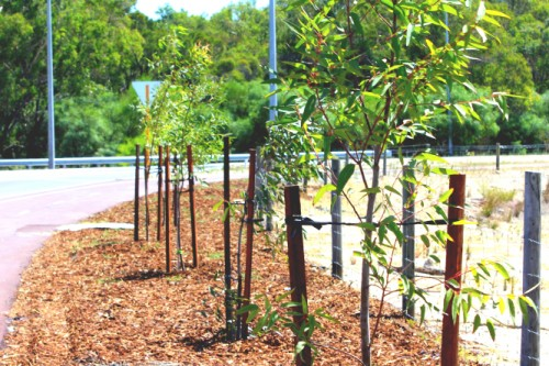 Landscaping Services - Tree Planting & Removal
